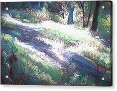 Morning Rays Acrylic Print by Anita Stoll