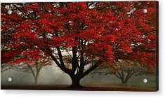 Acrylic Print featuring the photograph Morning Rays In The Forest by Ken Smith