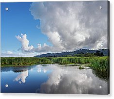 Acrylic Print featuring the photograph Morning Reflections On A Marsh Pond by Greg Nyquist