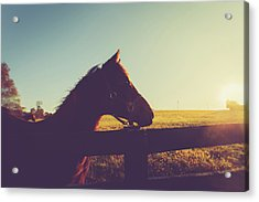 Acrylic Print featuring the photograph Morning  by Shane Holsclaw