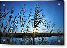 Good Day Sunshine Acrylic Print by John Glass