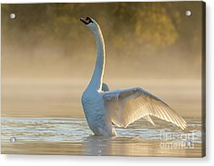 Morning Stretch Acrylic Print