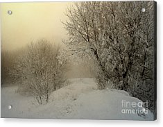 Morning Struggles Acrylic Print by Jan Piller