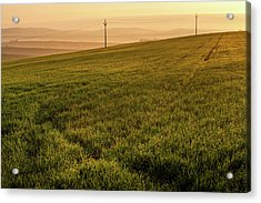Acrylic Print featuring the photograph Morning Sun. Moravian Tuscany by Jenny Rainbow