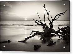 Morning Sun On Driftwood Beach In Black And White Acrylic Print