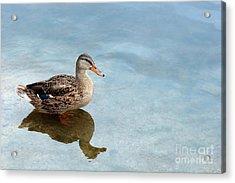 Morning Swim Acrylic Print by Jeannie Burleson