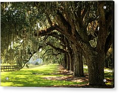 Morning Under The Mossy Oaks Acrylic Print