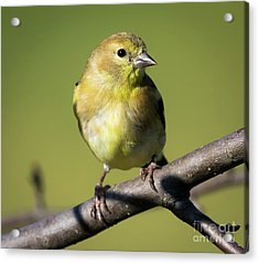Acrylic Print featuring the photograph Morning Visitor  by Ricky L Jones