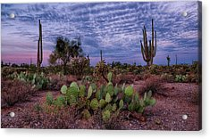 Acrylic Print featuring the photograph Morning Walk Along Peralta Trail by Monte Stevens