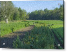 Morning Walk At Langwater Farm Acrylic Print