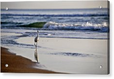 Morning Walk At Ormond Beach Acrylic Print by Steven Sparks