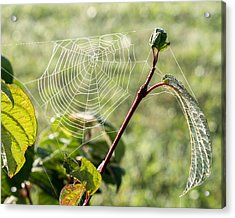 Morning Web #1 Acrylic Print