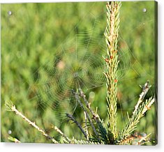 Morning Web #2 Acrylic Print