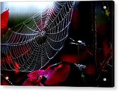 Morning Web Acrylic Print