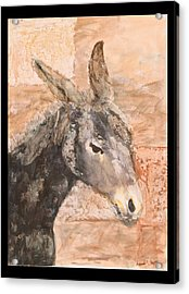 Moroccan Donkey Acrylic Print by Laura Vazquez
