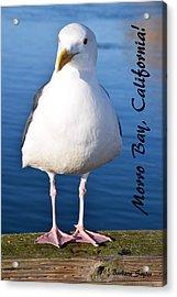 Morro Bay Seagull Acrylic Print by Barbara Snyder