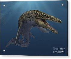 Mosasaurus Hoffmanni Swimming Acrylic Print by Sergey Krasovskiy