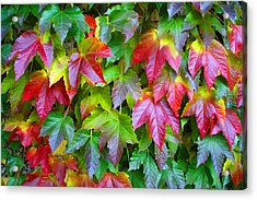 Moselle Valley Leaves Acrylic Print