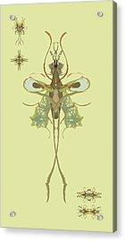 Mosquito Specimen Acrylic Print