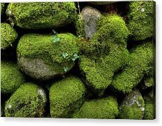 Acrylic Print featuring the photograph Moss And Ivy by Mike Eingle