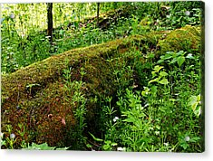 Moss Covered Log 2 Acrylic Print