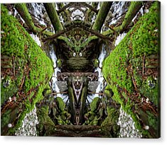 Moss Monsters Acrylic Print by Pelo Blanco Photo