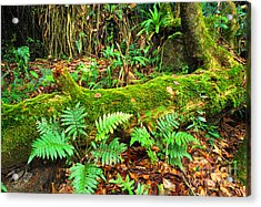 Moss On Fallen Tree And Ferns Acrylic Print by Thomas R Fletcher