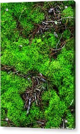 Acrylic Print featuring the photograph Moss On The Hillside by Mike Eingle
