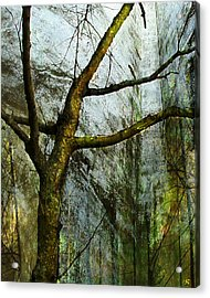 Moss On Tree Acrylic Print