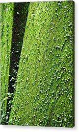 Moss Acrylic Print by Pramod Bansode