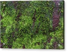 Moss Rock Acrylic Print