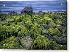 Moss Rocks Acrylic Print