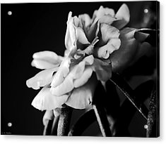 Moss Rose I Acrylic Print