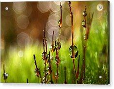 Moss Sparkles Acrylic Print by Sharon Johnstone