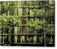 Mossy Bamboo Fence - Digital Art Acrylic Print by Carol Groenen