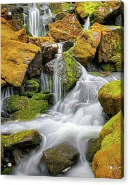 Mossy Falls Acrylic Print by Bill Wakeley