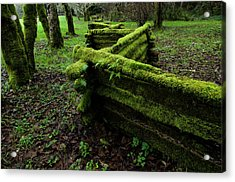 Mossy Fence 5 Acrylic Print by Bob Christopher