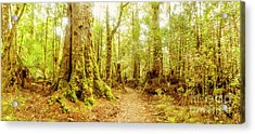 Mossy Forest Trails Acrylic Print
