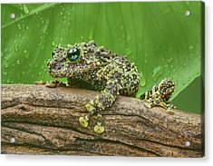 Acrylic Print featuring the photograph Mossy Frog by Nikolyn McDonald