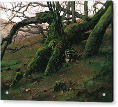Mossy Oak Acrylic Print by Bill Mather
