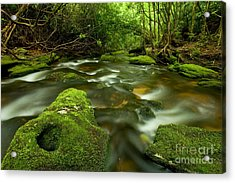 Mossy Rainforest Stream Acrylic Print by Matt Tilghman