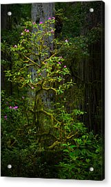 Mossy Rhododendron Acrylic Print