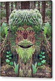 Mossman Tree Stump Acrylic Print by Martin Konopacki