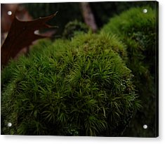 Mossy Wood 003 Acrylic Print by Ryan Vaal