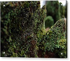 Mossy Wood 008 Acrylic Print by Ryan Vaal