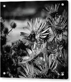 Moth And Flowers Acrylic Print