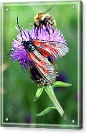 Moth Acrylic Print by Joy Powell