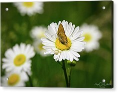 Moth Meets Spider Acrylic Print