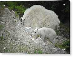 Acrylic Print featuring the photograph Mother And Baby   by Dyle   Warren