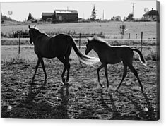 Mother And Baby Acrylic Print by J D Banks
